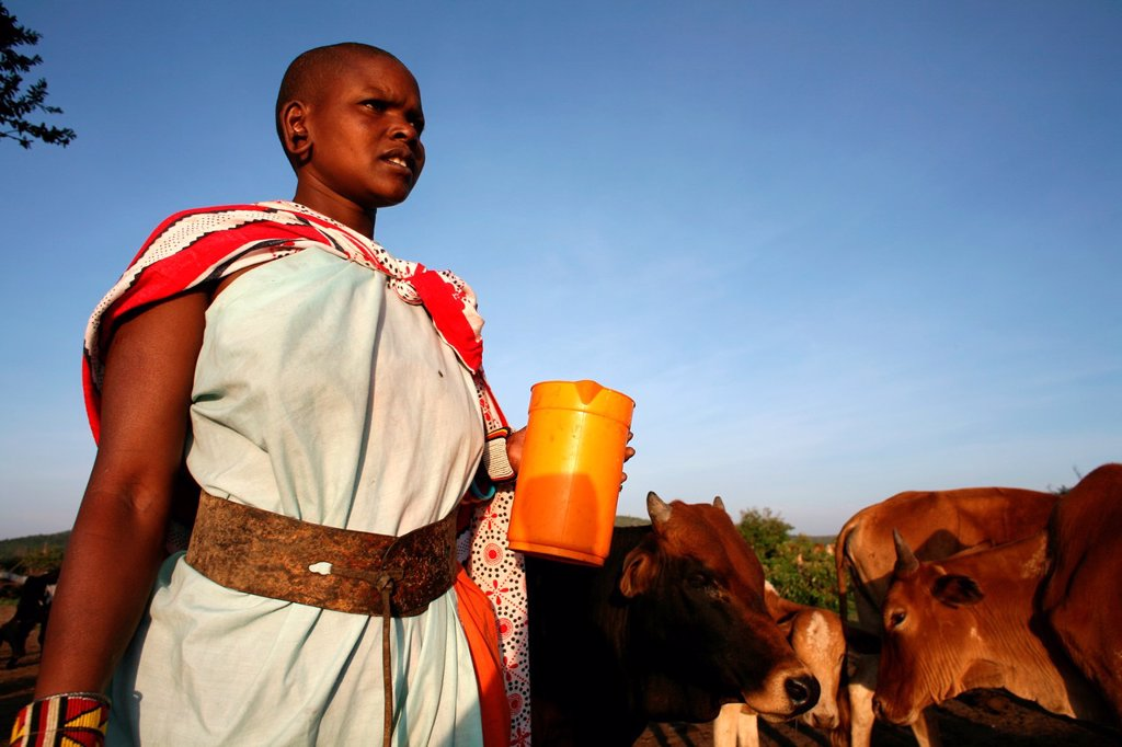 Stock Photo: 1566-977650 Ngoiroro is a village of 200 inhabitants, all belonging to the Massai Tribe The village lays right in the rift valley, south of Nairobi against the tanzanian border The Massai live very close to nature and their animals The cows and goats are more importa