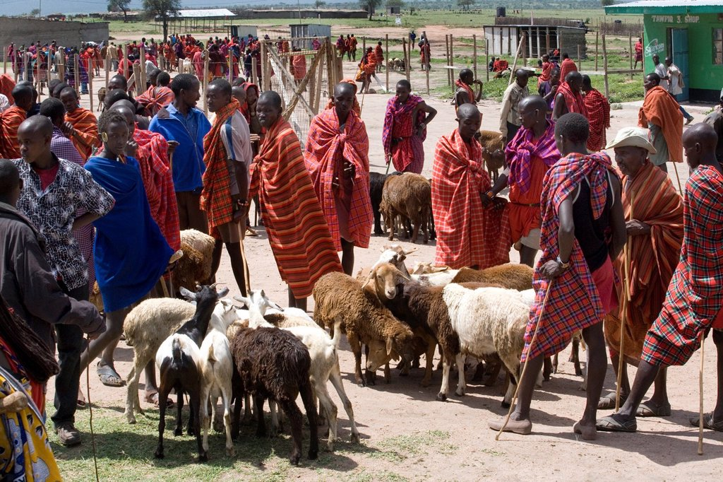 Weekly livestock market in the Massai mara game reserve The village is inhabited by Massai who consider their animals as most important in live Each farmer owns around 50 to 100 cows and goats On the market they sell and buy cows, goats and sheep : Stock Photo