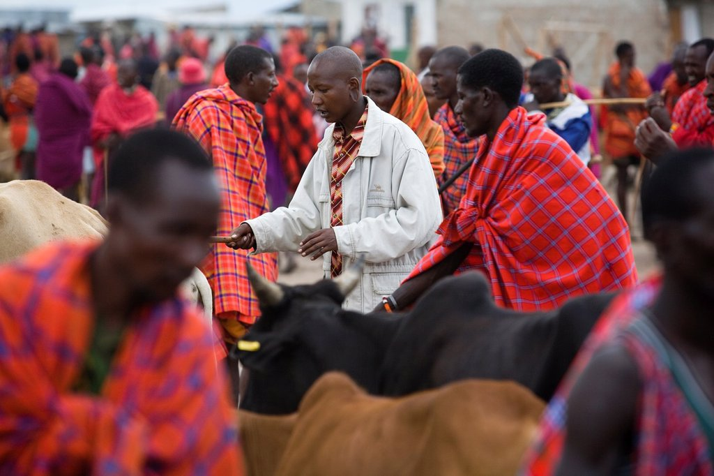 Stock Photo: 1566-977661 Weekly livestock market in the Massai mara game reserve The village is inhabited by Massai who consider their animals as most important in live Each farmer owns around 50 to 100 cows and goats On the market they sell and buy cows, goats and sheep