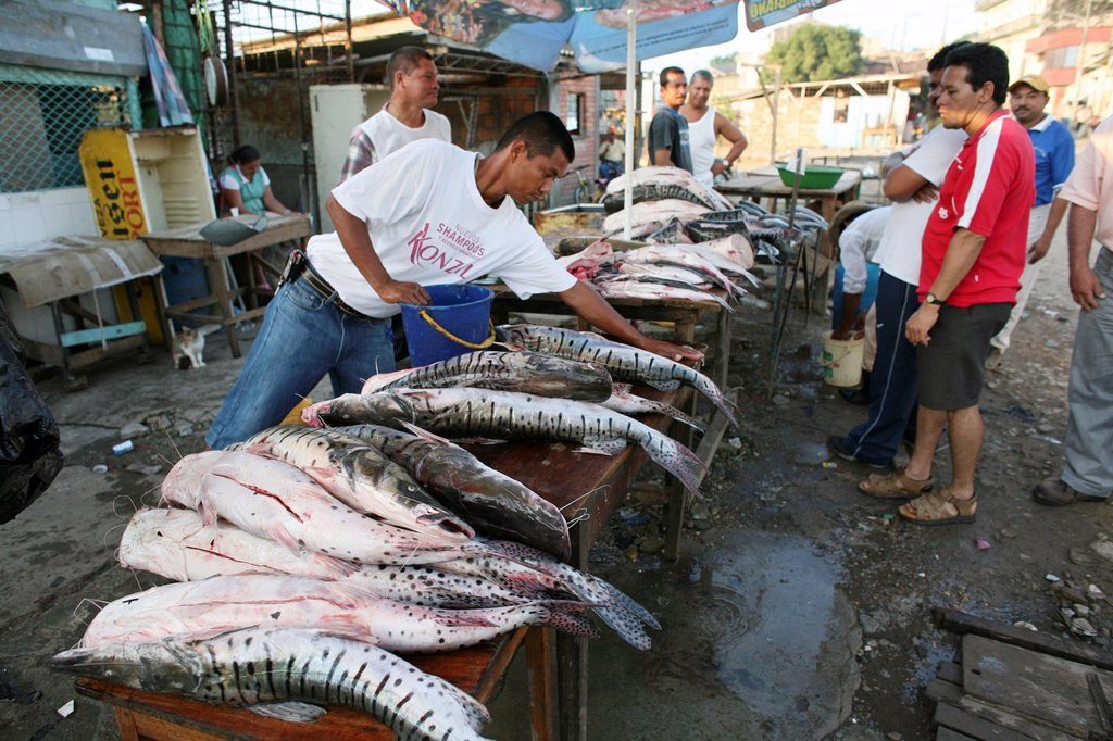 Stock Photo: 1566-978003 Fishing is the main income of the population near the river Magdalena