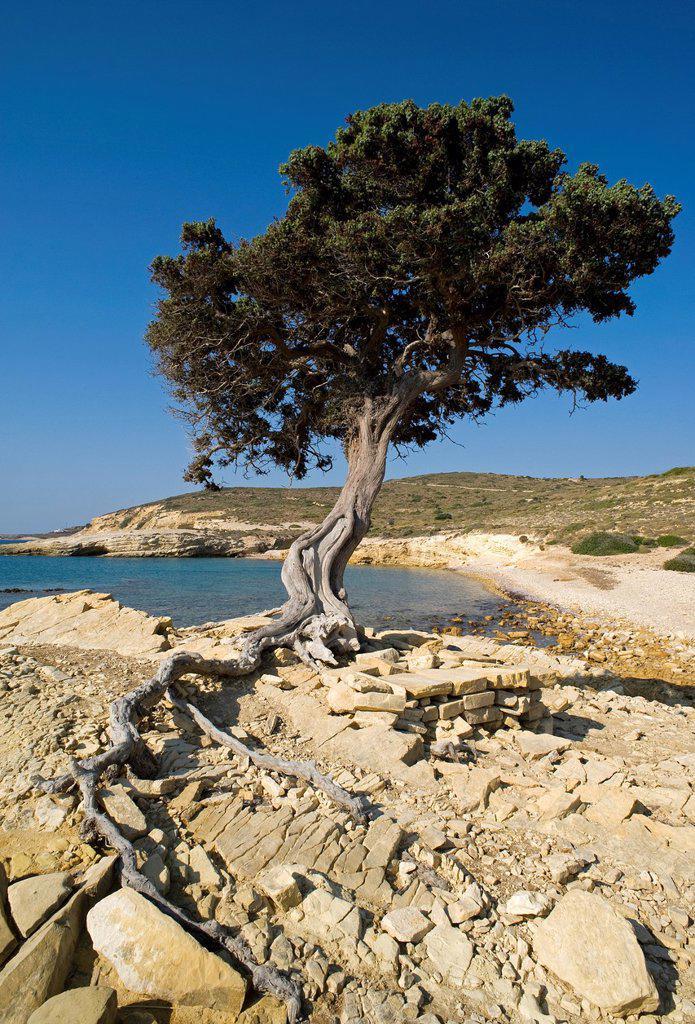 Stock Photo: 1566-978801 Monodendri beach, Lipsi Island, Dodecanese, Greece