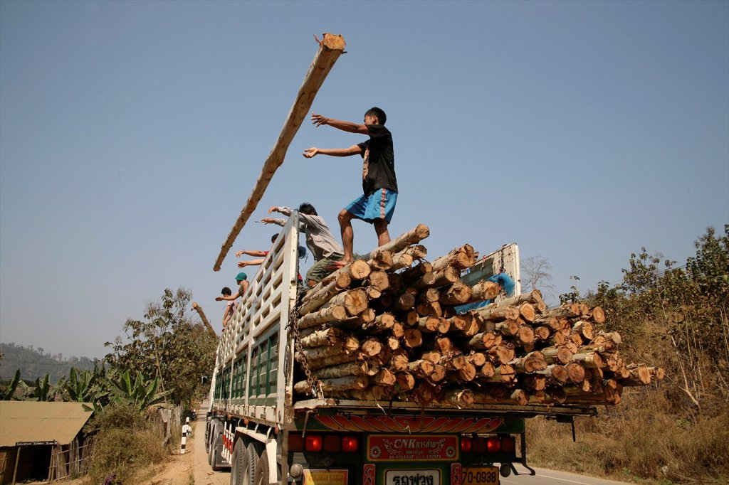 Stock Photo: 1566-980069 Builders unload logs to build more refugee homes Around 130,000 Burmese refugees have settled in Thailand due to opression in their homeland of Myanma...