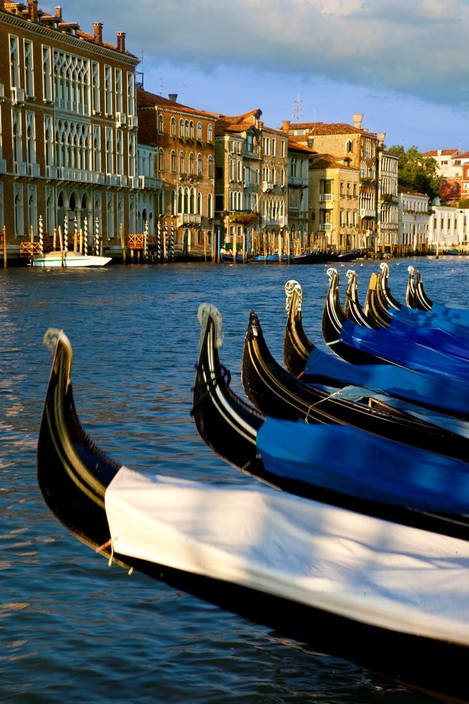 Stock Photo: 1566-981749 Gondolas lined up - early morning on the Grand Canal, Venice Veneto Italy