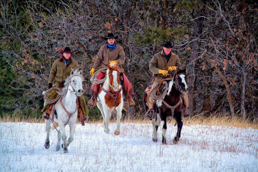 Stock Photo: 1566-981982 Three cowboys riding horses