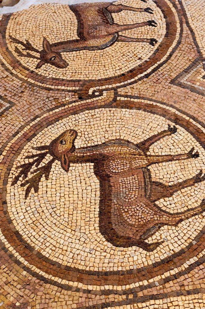 Mosaic tile floor, Great Temple, Petra Archaeological Park, Petra, Jordan : Stock Photo