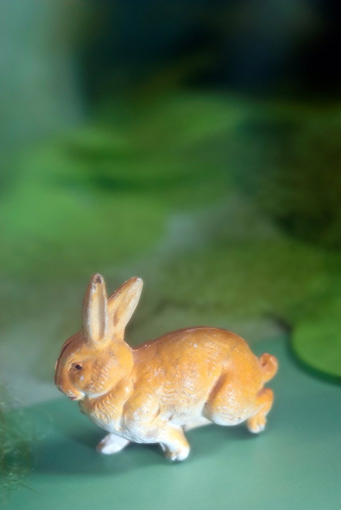 rabbit in green space : Stock Photo