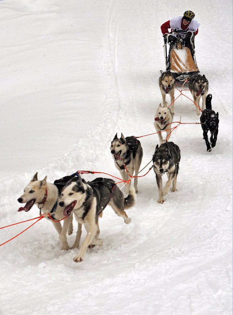 Stock Photo: 1566-987262 Dog Sled Races, Gadmen, Bernese Oberland, Switzerland, Europe