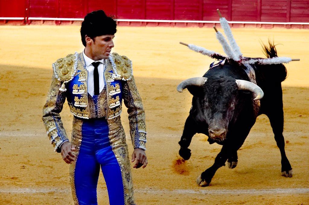 Stock Photo: 1566-990211 A Spanish bullfighter runs away from a bull at the bullring in Torremolinos, Spain, 28 July 2006