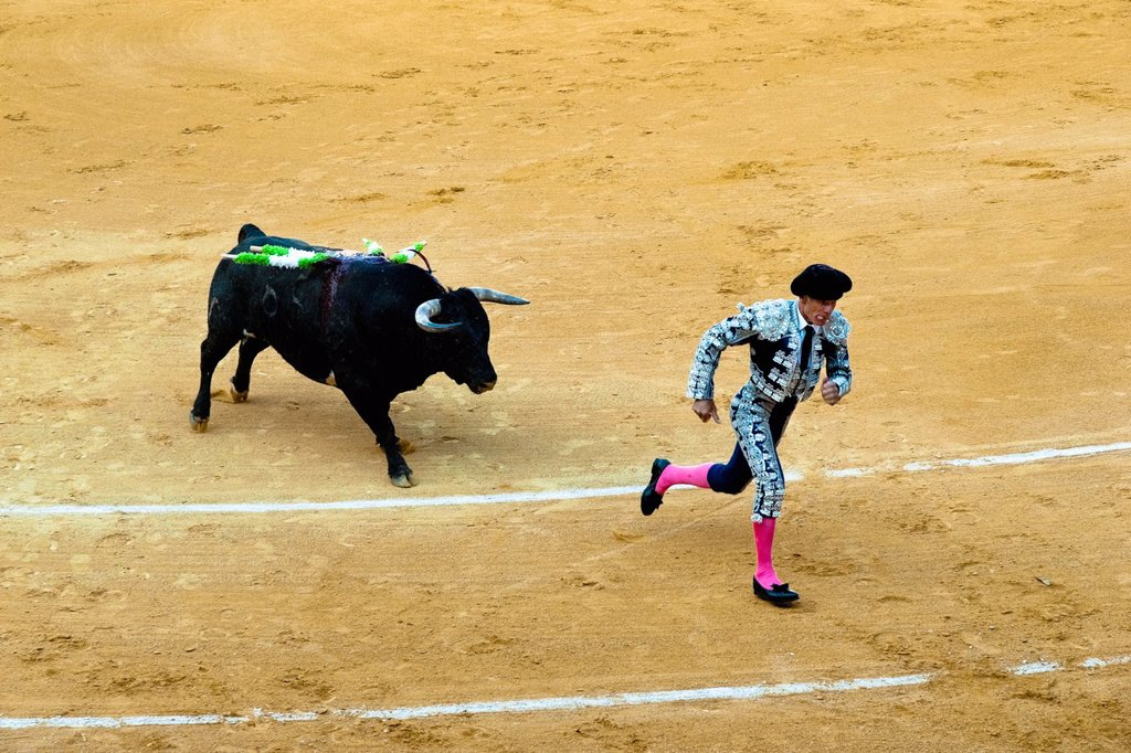 A Spanish bullfighter banderillero runs away from a bull at the bullring in Granada, Spain, 7 June 2006 : Stock Photo