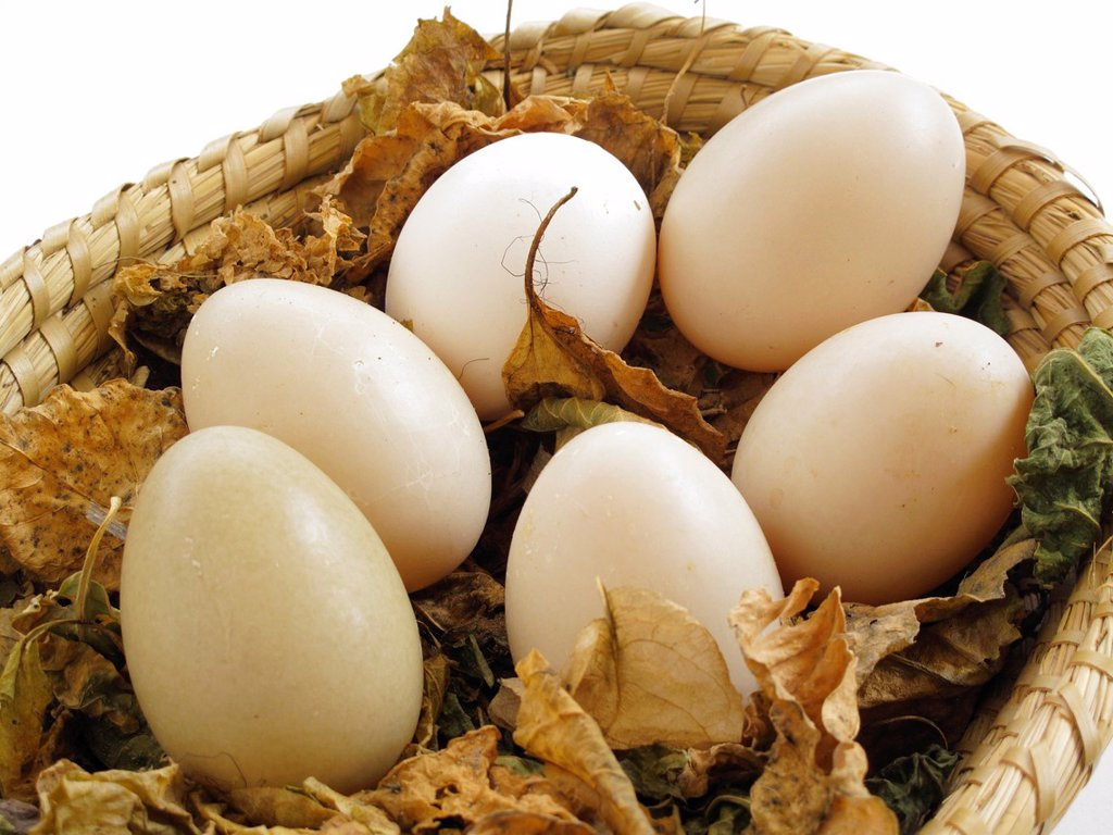 Stock Photo: 1566-992007 Egg basket