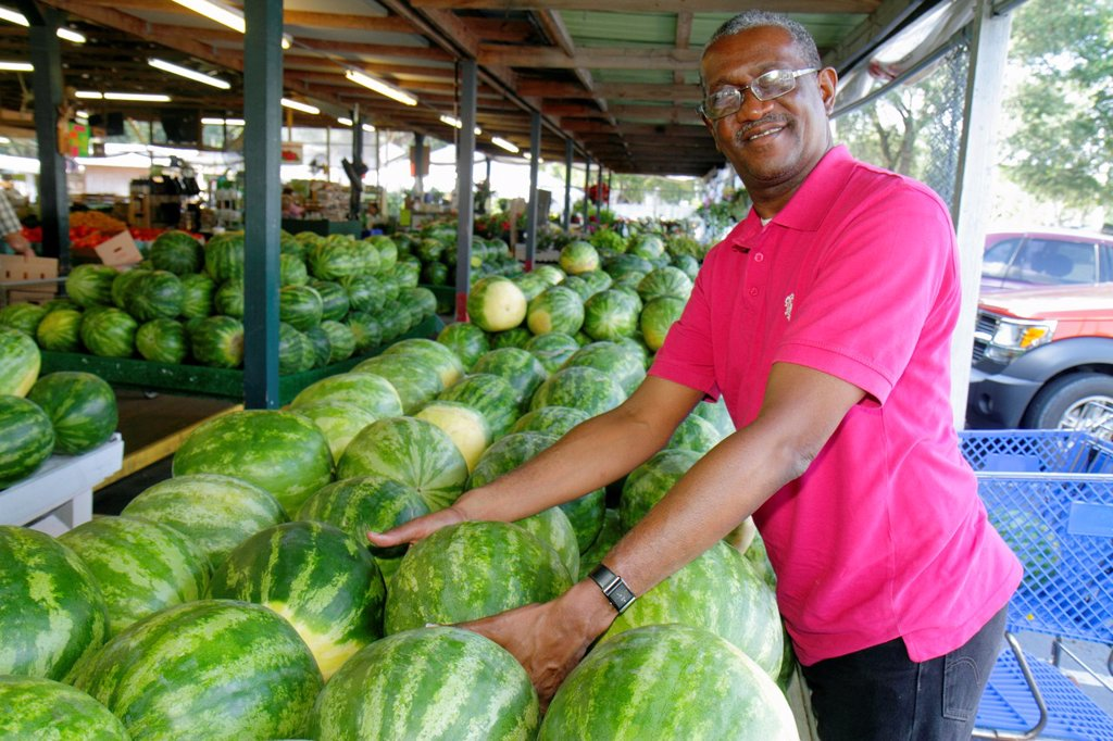 Stock Photo: 1566-993188 Florida, Dover, Brandon Farms Market, locally grown produce, for sale, business, sweet seedless watermelons, Black, man, smiling, selecting,