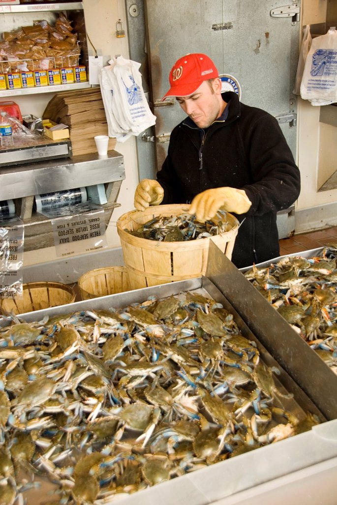 Stock Photo: 1566-994965 Washington DC, fresh fish and shellfish market on Maine Ave, selling Chesapeake Bay blue crab and various fish, all fresh and live off the boats.