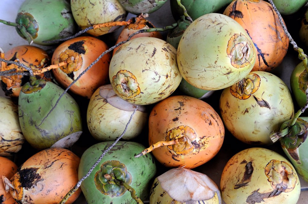 Stock Photo: 1566-995258 coconuts, Martinique, french island overseas region and department in the Lesser Antilles in the eastern Caribbean Sea, Atlantic Ocean