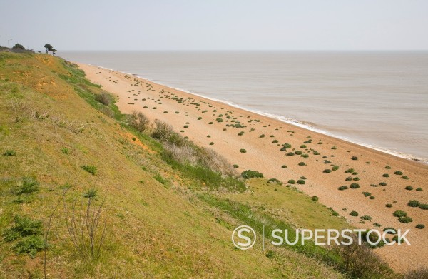 Stock Photo: 1566-996094 Sea kale grows in clumps on shingle beach below grassy cliffs at Bawdsey, Suffolk, England