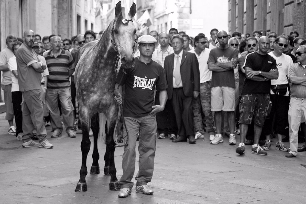 Stock Photo: 1566-999327 A horse and Contrada wait to enter the Piazza del Campo, The Palio, Siena, Italy