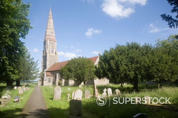 Stock Photo: 1566-999440 Gravestones, trees and large spire of church of Saint Andrew, Great Finborough, Suffolk, England