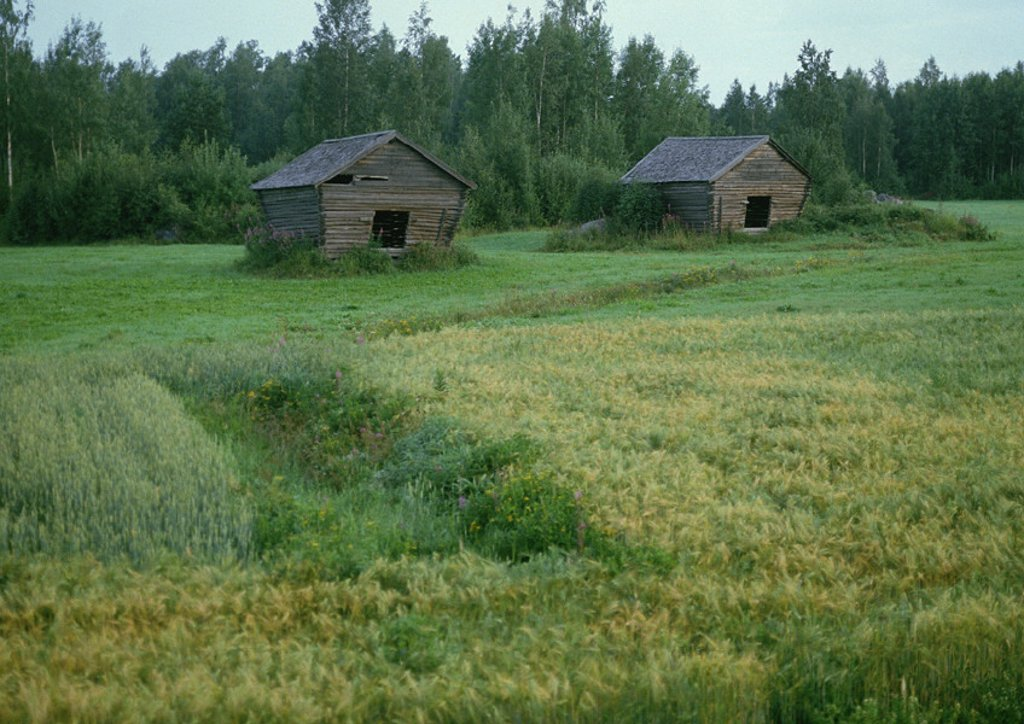 Finland, wood cabins in clearing : Stock Photo