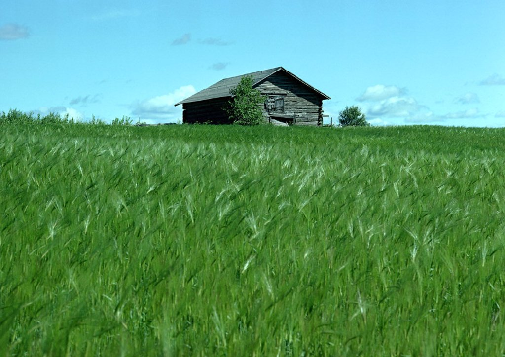 Finland, log cabin in field of green grass : Stock Photo