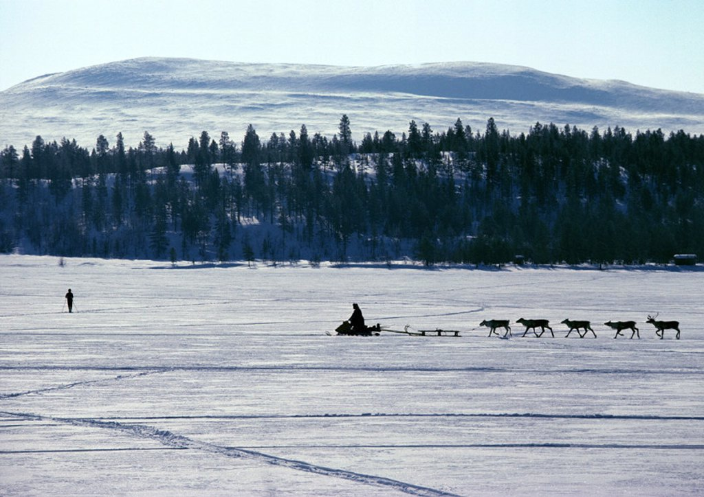 Finland, snowmobile and reindeer in silhouette : Stock Photo