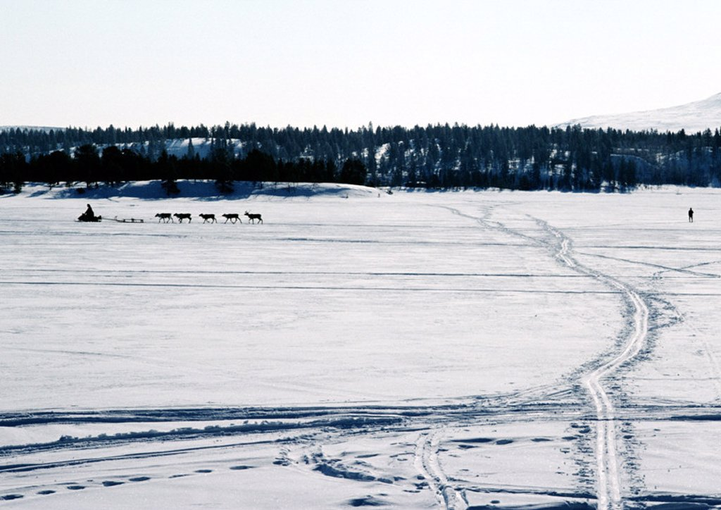 Stock Photo: 1569R-16024 Finland, tracks across snow, snowmobile and reindeer in distance