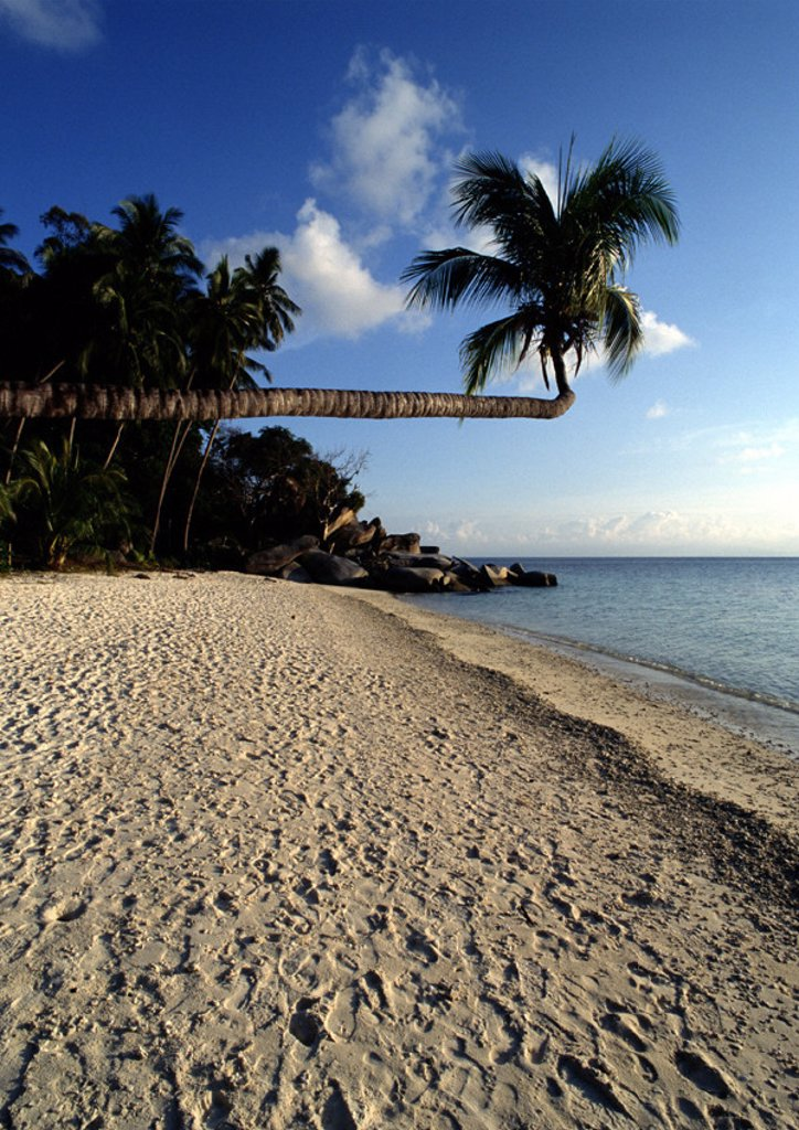 Malaysia, Perhentian Besar Island, palm tree hanging over beach : Stock Photo