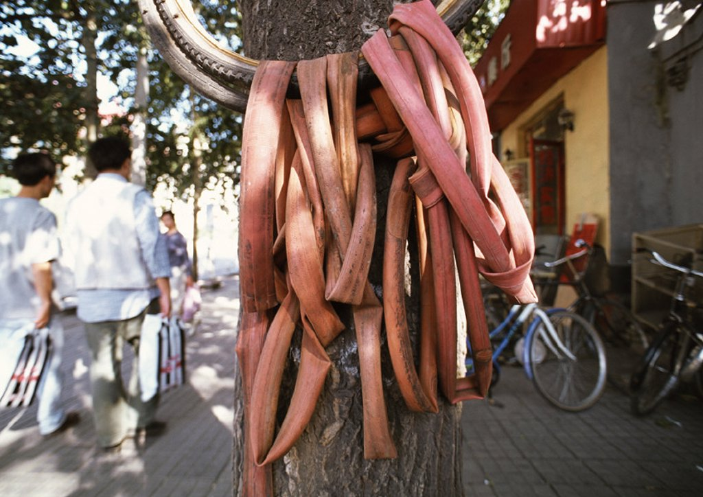 China, Beijing, rubber tubes hanging next to tree, people in background : Stock Photo