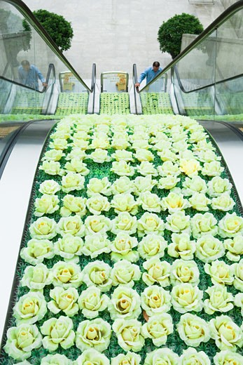 High angle view of escalators, roses decorating middle section : Stock Photo