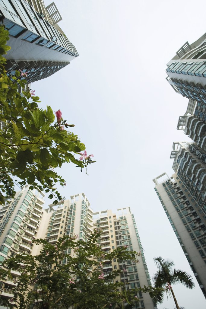 Stock Photo: 1569R-9028289 China, Guangdong Province, Guangzhou, high rises and trees in blossom, low angle view