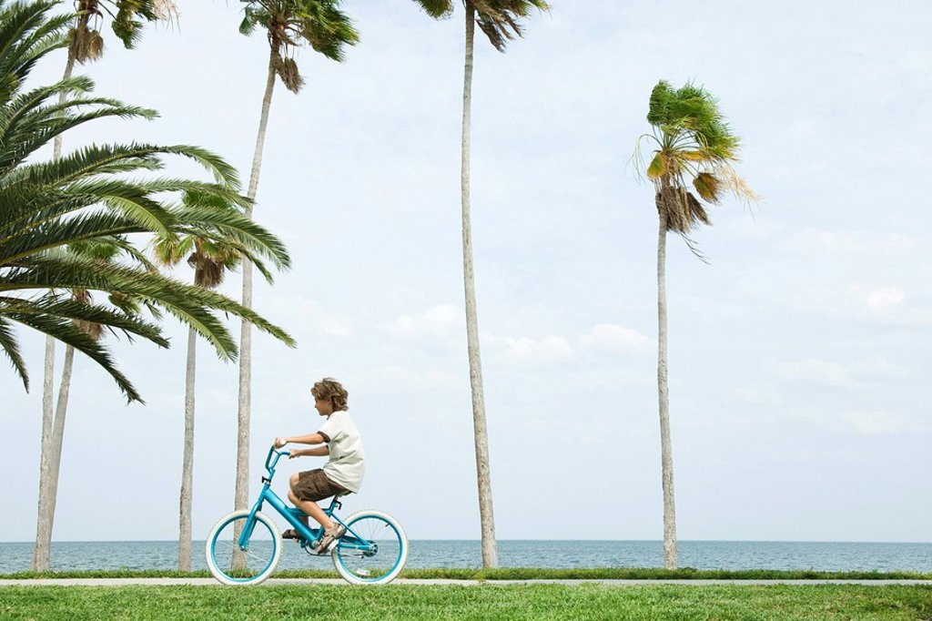 Boy riding bicycle beside palm trees, side view : Stock Photo