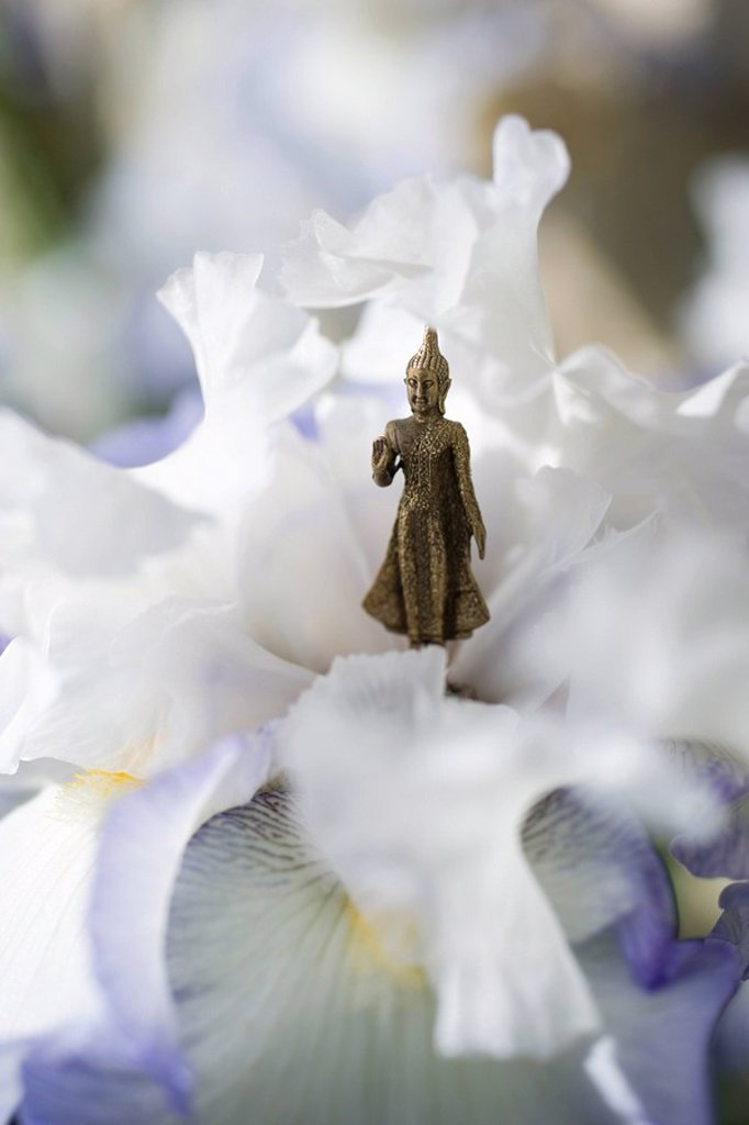 Miniature Buddha figurine standing in center of iris : Stock Photo