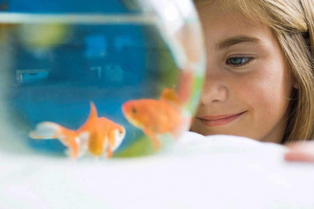 Child watching goldfish swim in fishbowl : Stock Photo