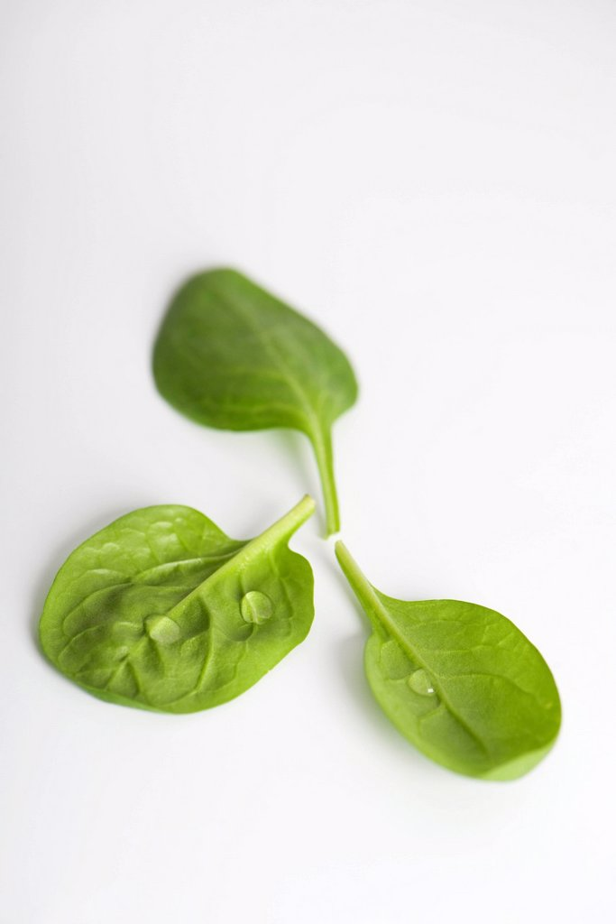Stock Photo: 1569R-9043676 Fresh baby spinach