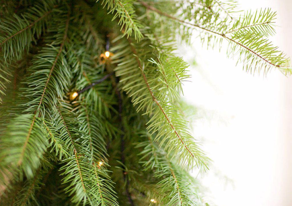 Christmas lights on christmas tree, close-up : Stock Photo