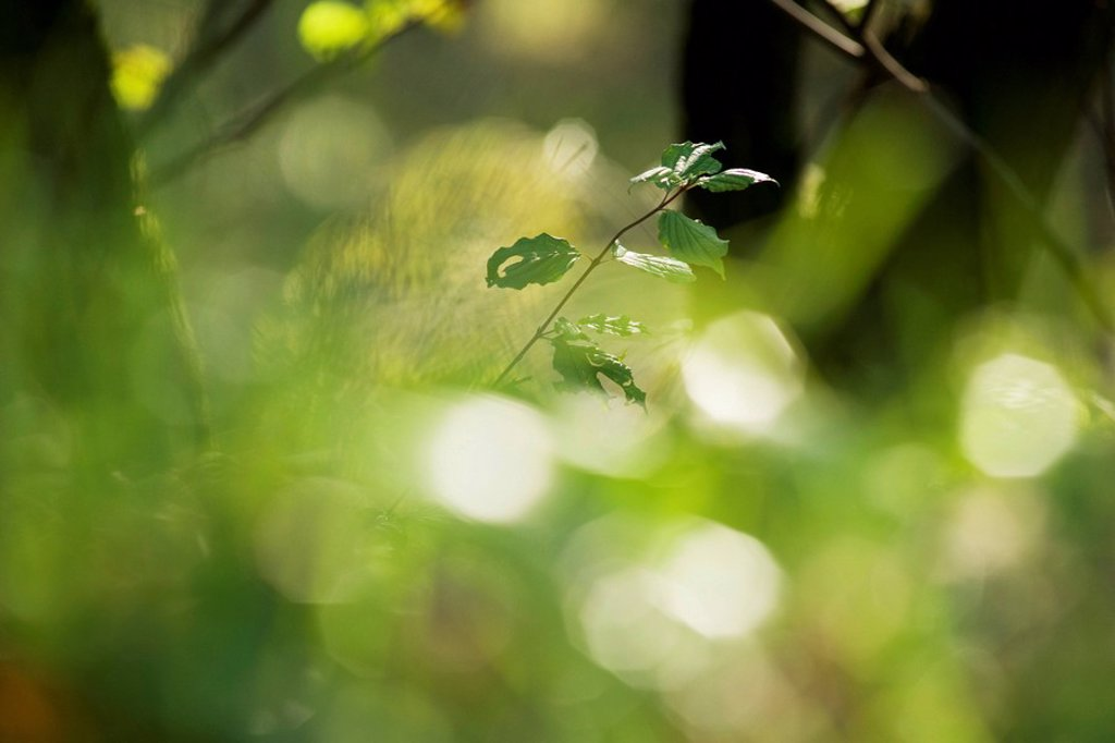 Stock Photo: 1569R-9066648 Leaves on young tree, selective focus