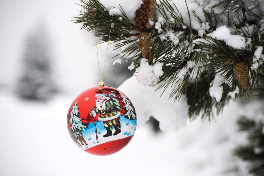 Colorful Christmas ornament hanging from snow_covered branch : Stock Photo