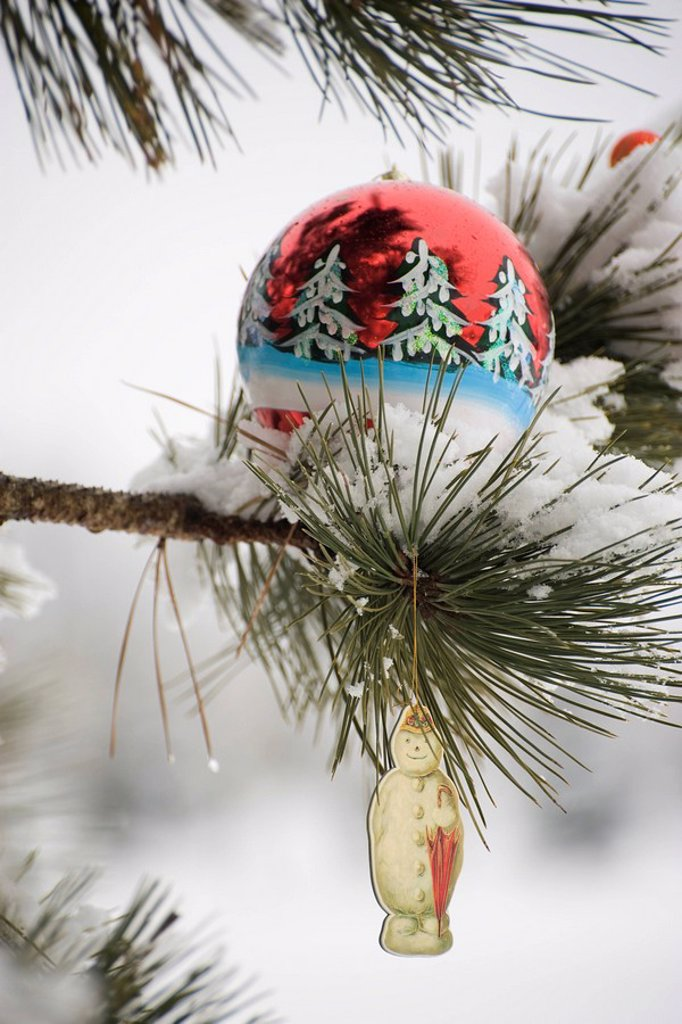 Stock Photo: 1569R-9066730 Christmas ornaments hanging on snow_covered branch