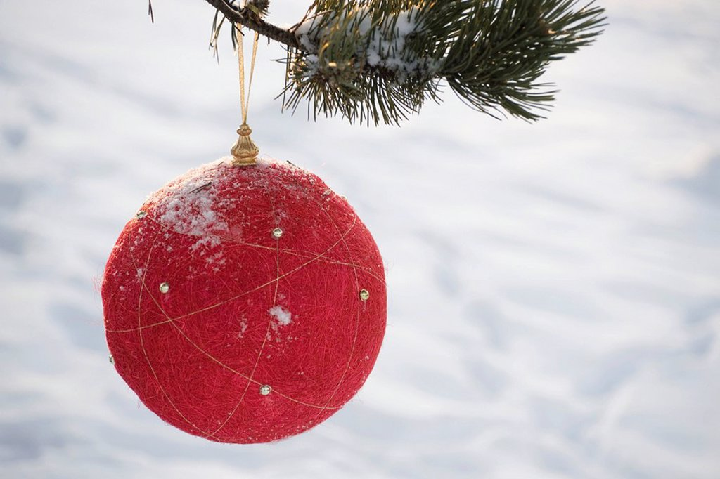 Stock Photo: 1569R-9066759 Red Christmas ornament hanging from evergreen branch, snow in background