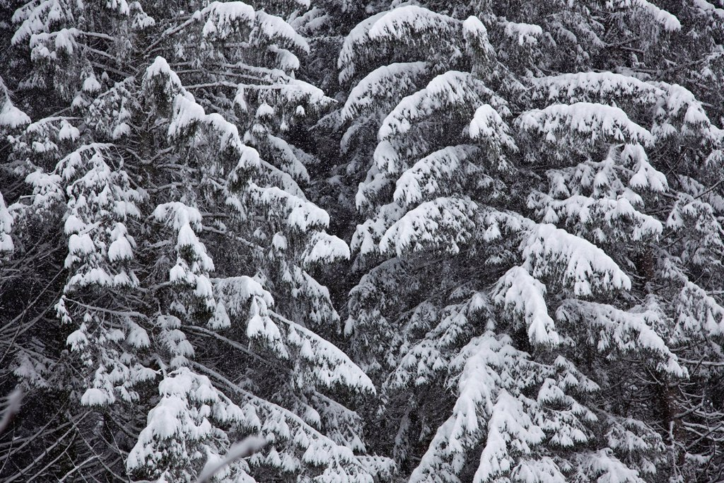 Snow_covered woods, cropped, full frame : Stock Photo