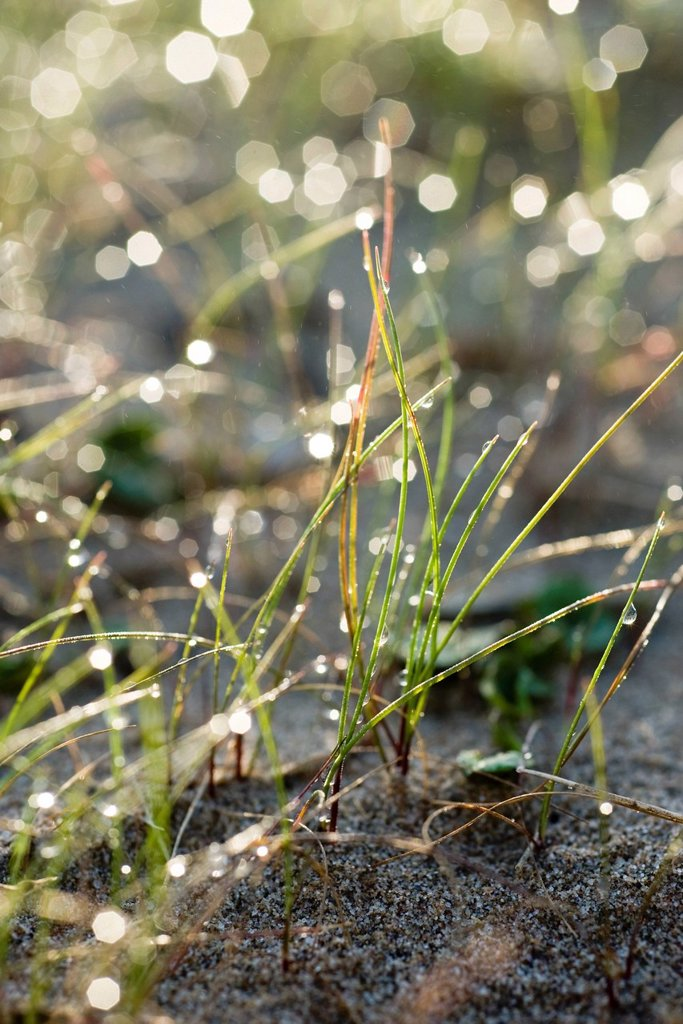 Stock Photo: 1569R-9068738 Morning dew in grass