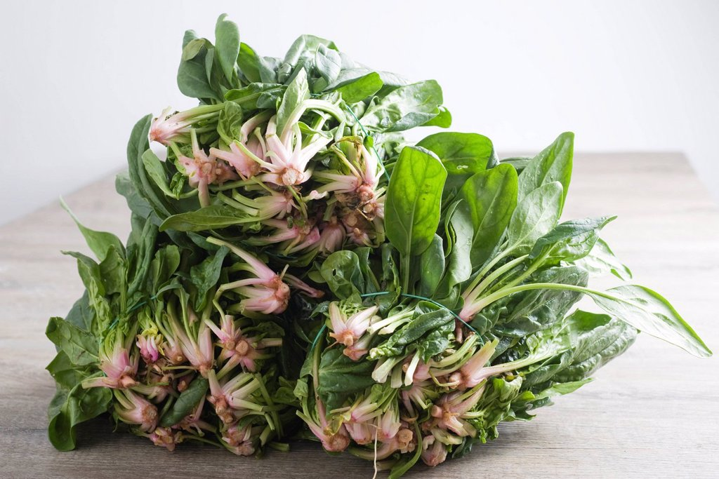 Bunches of fresh spinach : Stock Photo