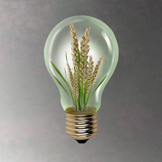 Stock Photo: 1569R-9069958 Ear of wheat growing inside of light bulb