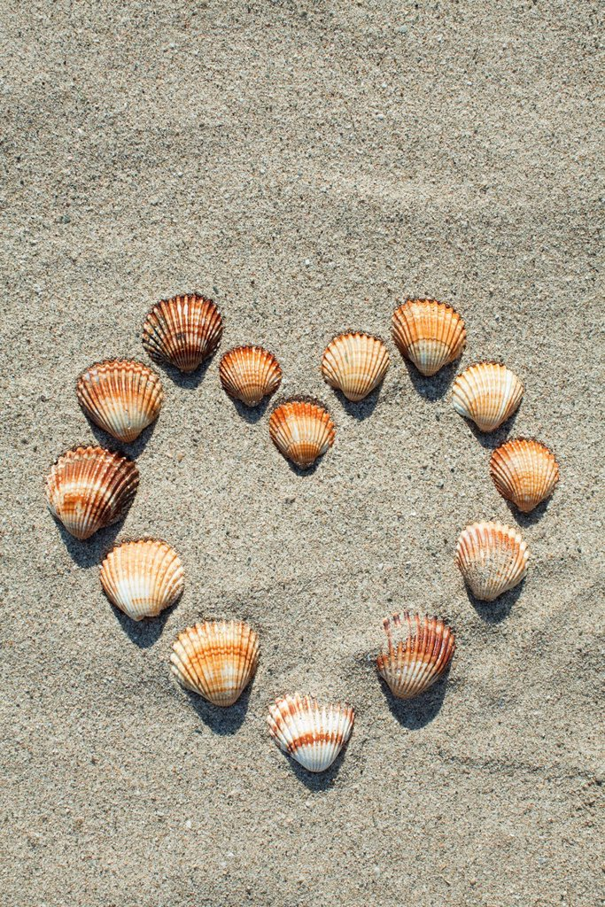 Stock Photo: 1569R-9071172 Seashells arranged in heart shape on sand
