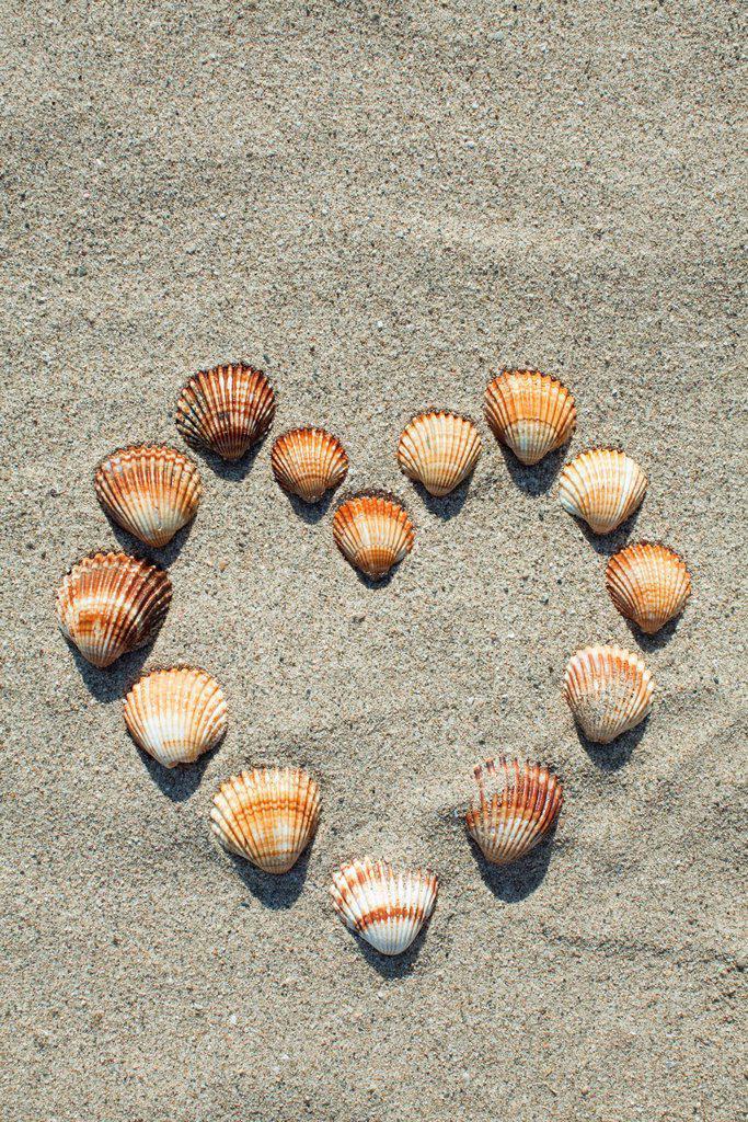 Seashells arranged in heart shape on sand : Stock Photo