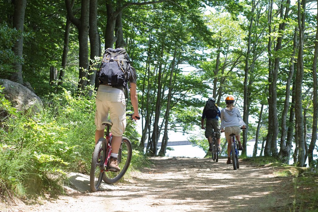 Cyclists riding through woods, rear view : Stock Photo