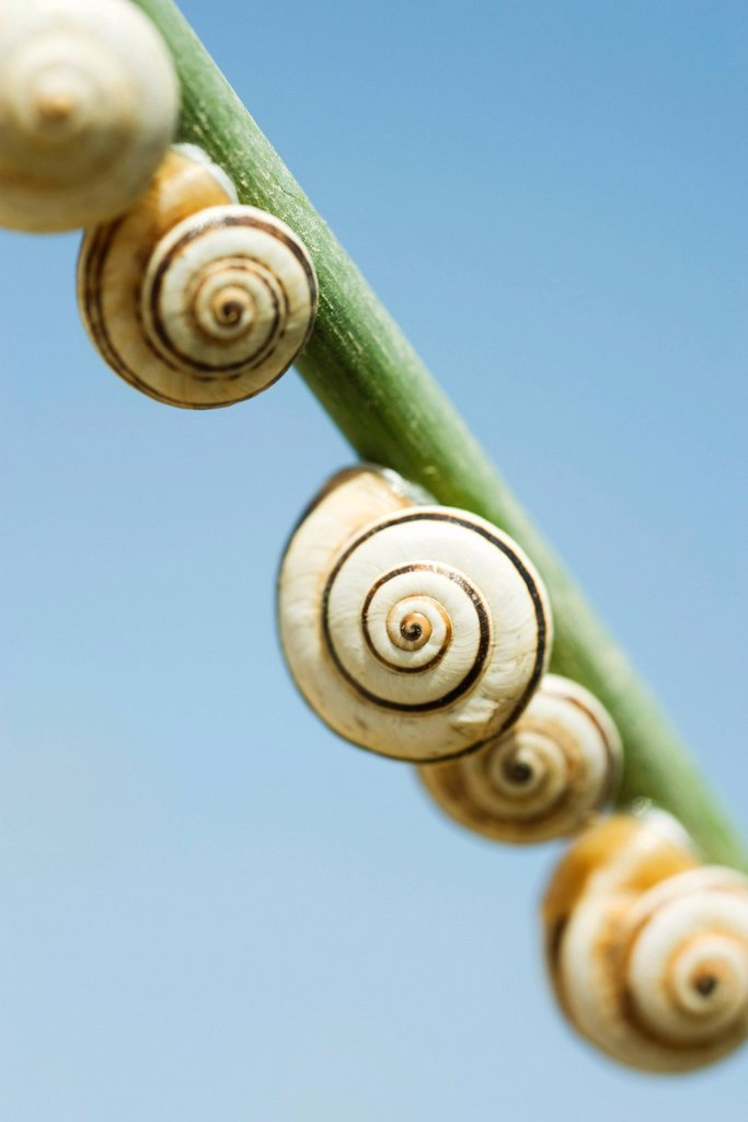 Stock Photo: 1569R-9072400 Snails on branch