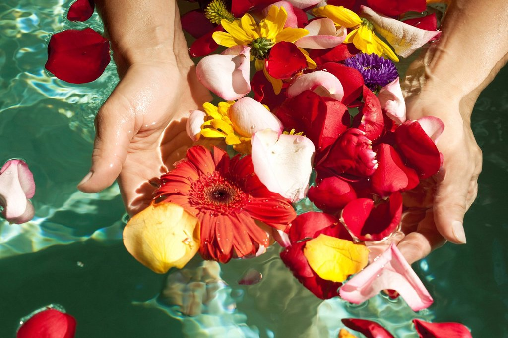Stock Photo: 1569R-9072739 Gathering flower petals floating on water