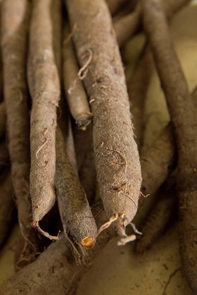 Stock Photo: 1569R-9073667 Black salsify