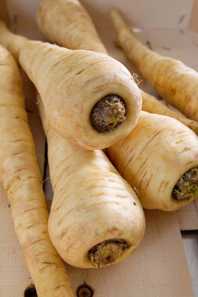 Stock Photo: 1569R-9073938 Parsnips