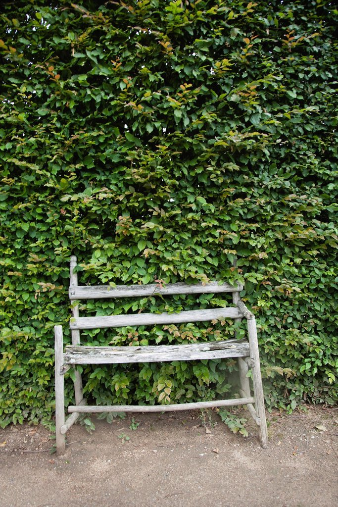 Stock Photo: 1569R-9074774 Rustic wooden bench in front of large hedge
