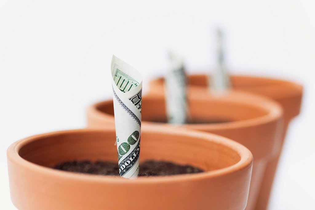 Stock Photo: 1569R-9077509 One_hundred dollar bills planted in flower pots